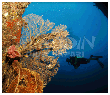 Diving at the Mergui Archipelago in Myanmar (Burma)